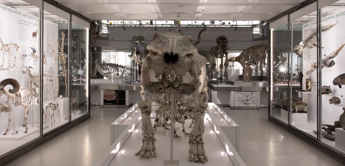 Cambridge Zoology Museum